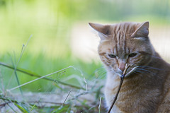 Where's my cat ? (tessagia) Tags: cats nature animals cat gatto gatti animali