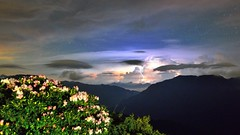 合歡山石門山~玉山杜鵑閃電雲~  Lightning Cloud above Taiwan Alpine Rhododendron (Shang-fu Dai) Tags: sky night landscape nikon taiwan 南投 nightscene 台灣 夜景 starry 花蓮 合歡山 杜鵑 雲海 hehuan 星空 閃電 杜鵑花 戶外 玉山杜鵑 石門山 仁愛鄉 主峰 高山杜鵑 lightningcloud 3416m taiwanalpinerhododendron afs1635mmf4 d800e