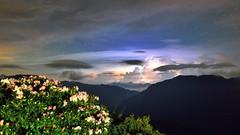 ~~  Lightning Cloud above Taiwan Alpine Rhododendron (Shangfu Dai) Tags: sky night landscape nikon taiwan  nightscene   starry     hehuan          lightningcloud 3416m taiwanalpinerhododendron afs1635mmf4 d800e