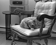 Sur la chaise de grand-papa... (Argentique) / On grandpas' chair...(Film) (Pentax_clic) Tags: bw robert film cat chair chat pentax kodak xx 11 double nb d76 mai f chase spotmatic warren argentique 2016