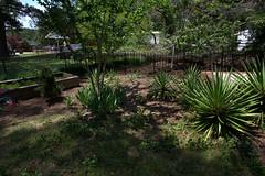 IMG_8634.CR2 (jalexartis) Tags: yard landscape backyard landscaping shrub yucca shrubbery yuccaplant