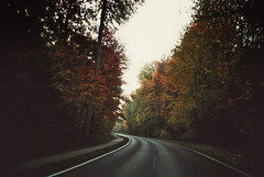 (LICHTHOF-CM) Tags: road street camera morning trees red sky white tree green fall love lines analog forest canon germany deutschland photography gold early woods heaven deep streetphotography eifel roads morgen deutsch verlassen 2016 lichthof stunde af35m af35 tumblr lichthoftumblrcom