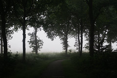 (esmeecadoni) Tags: morning trees light sky mist holland tree green nature netherlands fog forest landscape photography spring woods europe outdoor sony minimal simplicity simple minimalistic drenthe littlethings beautifulearth