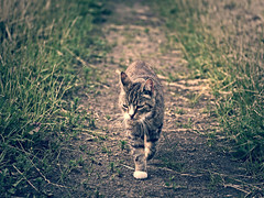 2016-06-16_19-36-52 (torstenbehrens) Tags: cat bokeh panasonic dmcg1 on1 on1pic