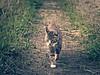 2016-06-16_19-36-52 (torstenbehrens) Tags: cat bokeh panasonic dmcg1 on1 on1pic