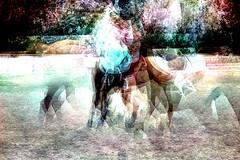 Dodici (Giulia Bracchi fotografie.) Tags: horse experiment cavalli cavallo equestrian equine twelve horseriding gallop esperimento equitazione