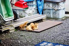 Today's Cat@2016-07-01 (masatsu) Tags: cat pentax catspotting mx1 thebiggestgroupwithonlycats