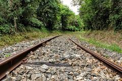 La vita  un viaggio. (giuseppemontalto) Tags: travel train binari viaggio life green partenza travelling treno