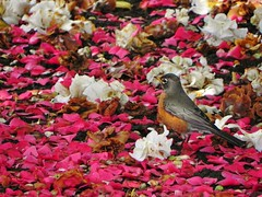 Happy iranian new year (Cna1_10) Tags: pink white flower color bird spring  norooz nowrouz