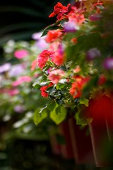 Patience plant (PongsawatD) Tags: plant flower macro closeup canon eos bokeh sigma apo 70300 f456 450d blinkagain bestofblinkwinners