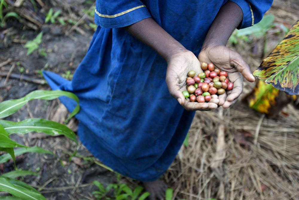 africa-uganda-coffee-beans