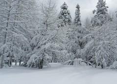 Snow Bow