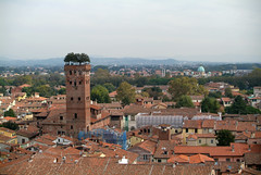 Lucca, uitzicht vanaf de Torre delle Ore op de Torre Guinigi, Italië 2007 (wally nelemans) Tags: italy italia lucca 2007 italië torreguinigi