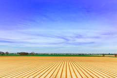 Fields of Sacto (boingyman.) Tags: california sky lines clouds canon landscape fields sacramento 1022 plowed boingyman