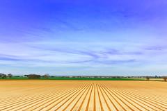 Fields of Sacto (boingyman.) Tags: california sky lines clouds canon landscape fields sacramento 1022 plowed boingyman