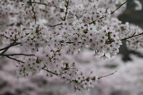 春らんまん