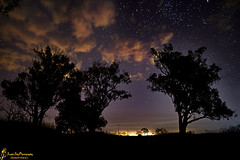 Moonshadow ...............................             Explored (southern_skies) Tags: trees cloud night stars