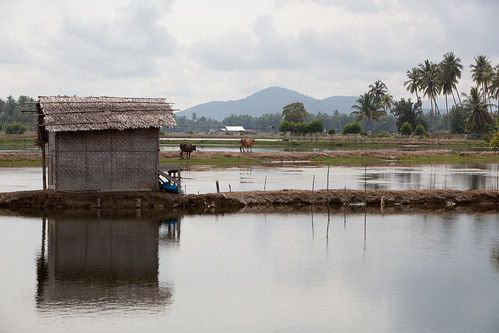 Shrimp ponds in Aceh, Indonesia. Photo by Mike Lusmore/Duckrabbit, 2012.