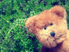 tiny ted (.•۫◦۪°•OhSoBoHo•۫◦۪°•) Tags: macro cute love saturated phonepic teddy sweet critter small negativespace teddybear cuddly kawaii odc windowsphone cutenessoverload tinyted samsungfocus 3incheshigh