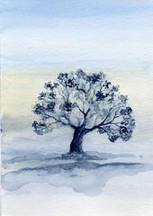 albero 36