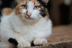 196/365 - Mel (Bruna_Wretzky) Tags: cat mel calico