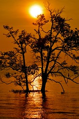 The Sun & The Earth (I)......... (Anna Kwa) Tags: sunset sea tree bird silhouettes johor muar thegalaxy westmalaysia mygearandme