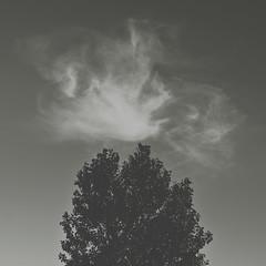 baum / wolke [andre gansebohm] (Andre Gansebohm) Tags: cloud black tree square grey wolke grau squareformat baum tristesse muted