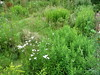 IMG_9437 (adstream) Tags: biodiversity fecund volkstuin