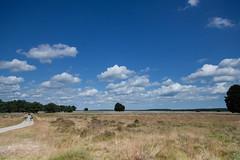 Hoge Veluwe (TIF Fotografie) Tags: park arnhem nederland zomer hogeveluwe nationaalpark deelensewas natuurenlandschap ingridfotografie