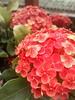 เข็ม (som300) Tags: flower plant motorola zn5