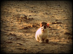 Curiosity sends first pictures from Mars (stempel*) Tags: nature cat kitty poland polska gato polen kot polonia kociak polskowola gambezia