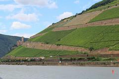 train ar Rüdesheim (Marlis1) Tags: train river vineyards valley rhine rhein rüdesheim bingen rhin burgehrenfels marlis1