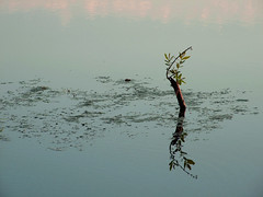 after the flood (henk hessel photography) Tags: reflection nature leaves canal branches explore trunk bestcapturesaoi