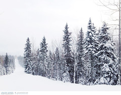 Ski Slope at Le Massif in Charlevoix, Quebec (Vincent Demers - Travel Photographer) Tags: travel trees winter white snow canada tree nature sport forest landscape outdoors quebec outdoor hiver evergreen skiresort le neige paysage wintersport arbre blanc forêt charlevoix sapin winterwonderland massif lemassif skislope pleinair travelphotography winteractivity conifère cellphonephotography sportdhiver traveldestination mobilephotography phoneography photographiedevoyage pistedeski photodevoyage iphoneography travellocation lemassifskiresort