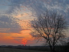 Tree at Sunset (Peas And Papillons) Tags: favescontestwinner friendlychallenges yourockwinner yourockunanimous