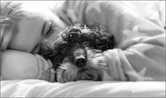 Sleep tight (nadia.smits) Tags: family portrait love blakandwhite netherlands girl sleep daughter nederland dachshund portret teckel limburg meerssen