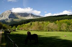 _DSC2209 (adrizufe) Tags: horses green nature landscape ilovenature nikon ngc bizkaia basquecountry springtime lovelyday atxondo durangaldea nikonstunninggallery aplusphoto d7000 adrizufe adrianzubia