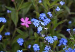 DSC_1142 (PeaTJay) Tags: flowers plants macro nature gardens fauna outdoors reading flora sigma micro closeups berkshire lowerearley nikond750