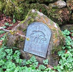 Running Trails near Milngavie, Scotland (Hear and Their) Tags: west forest way scotland glasgow trails running millennium highland jogging milngavie