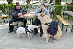 DSC_5090-10 (kytetiger) Tags: brussels dog chien market bruxelles medieval march cinquantenaire mdival etterbeek