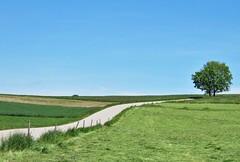 Adrian Vesa Photography (adr.vesa) Tags: road panorama tree nature field fence landscapes minimalism