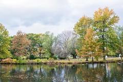 Autumn on Boston Common (Oliver Leveritt) Tags: nikond7100 afsnikkor2470mmf28ged oliverleverittphotography boston bostoncommon lake trees pond autumncolors