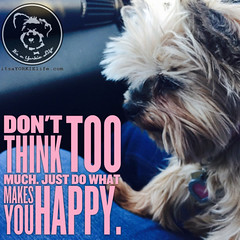 Take a lesson from your Yorkie (itsayorkielife) Tags: yorkiememe yorkie yorkshireterrier quote