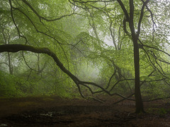 Creeping (Damian_Ward) Tags: wood morning trees mist misty fog forest woodland photography buckinghamshire foggy beech thechilterns chilternhills damianward damianward