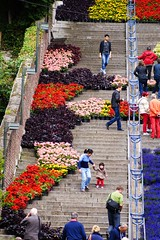 Bueren en fleurs (Lige 2016) (LiveFromLiege) Tags: fleurs montagne belgium belgique axel liege luik lige wallonie bueren lieja lttich liegi montagnedebueren diablesrouges witsel axelwitsel euro2016 buerenenfleurs