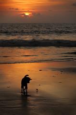A Dog and his Crab (ClikSnap) Tags: bali seminyak