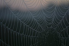 Wet Web (imkaifilbey) Tags: morning wet water field grass sunrise spider dof web spiderweb cobweb dew depth
