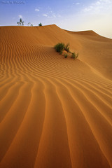 Desert Sand (TARIQ-M) Tags: pictures sky cloud tree texture sahara lens landscape photo sand waves pattern desert image photos ripple patterns dunes picture wave images ripples riyadh sau