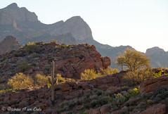 Apache Trail in the morning (Squirrel Girl cbk) Tags: morning arizona saguaro apachetrail