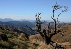 Last Grasp (Tones Corner) Tags: newzealand tree countryside scenic scene vista marlborough highcountry wairau nzscene nzscenery nzscenic nzrural nzhighcountry